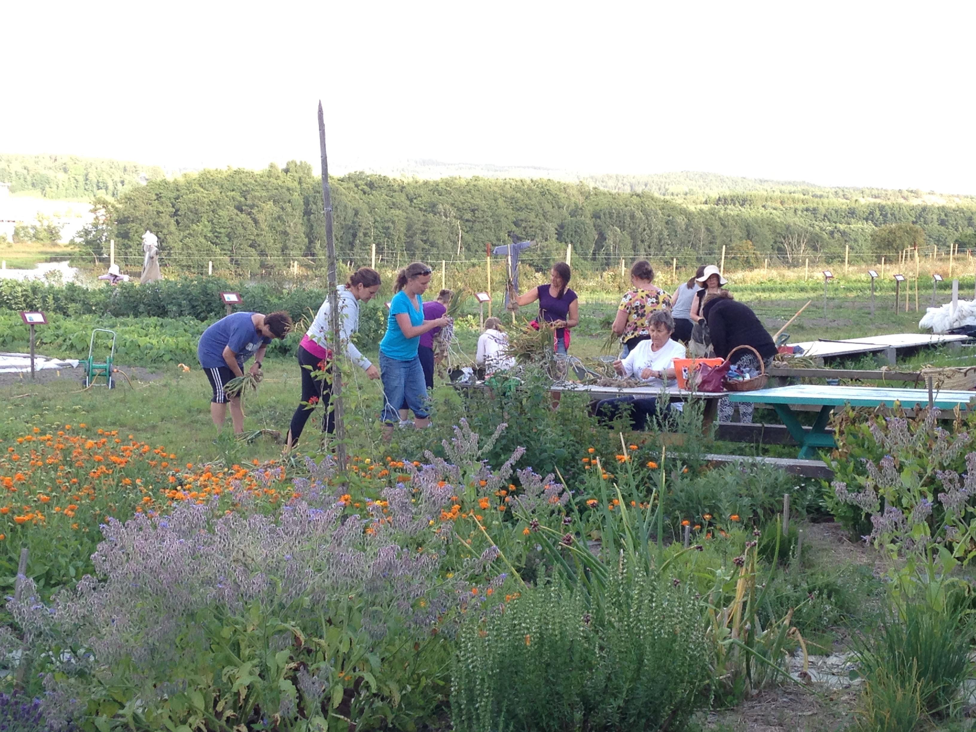 Grønnsaker og fellesskap