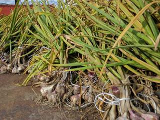 Høstemelding uke 32
