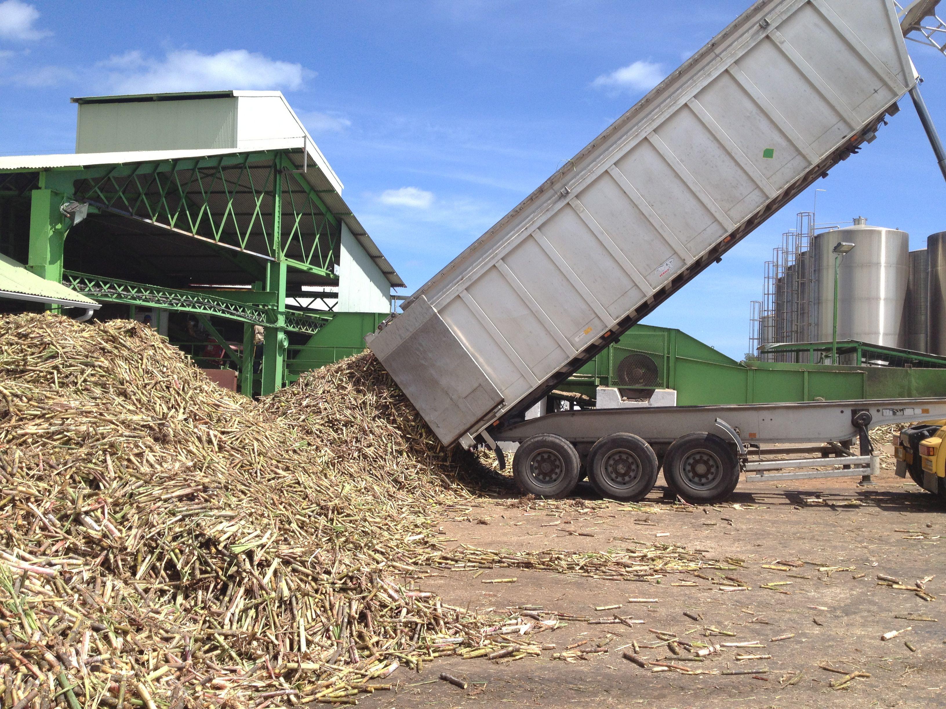 Sugar Cane Delivery