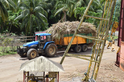 Trois Rivieres Sugar Cane Arrival