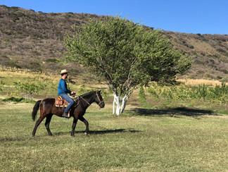 cabañas__en_nayarit__y_paseo_a_caballo_e