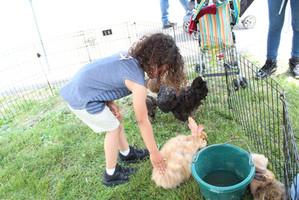 Festival 2019 Petting Zoo