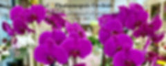orchid cover.jpg
