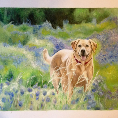Labrador in Field - Coloured pencil/acrylic paint