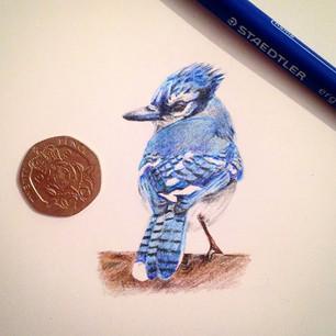 blue jay mini.jpg