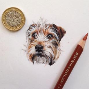 Parsons terrier.jpg