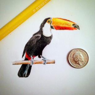 toucan mimni.jpg