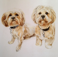 Two White Floofers - Coloured pencil