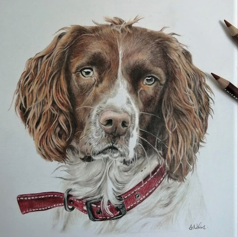 Hunter - Coloured Pencil