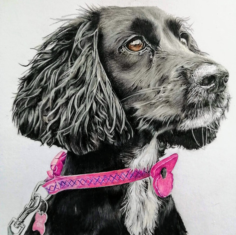 Nellie - Coloured Pencil