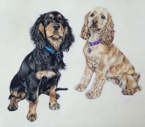 Spaniels - Coloured pencil