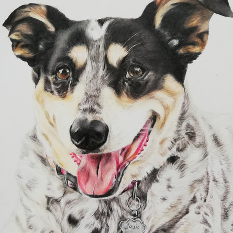 Spotty Dog - Coloured pencil