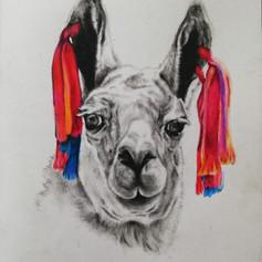 Llama - Charcoal/coloured pencil