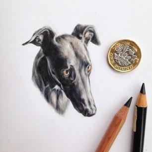 greyhound mini.jpg