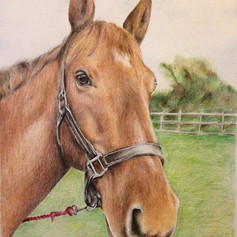 Horse (with background) - Coloured Pencil