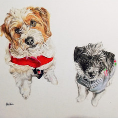 Dogs in Jumpers - Coloured pencil