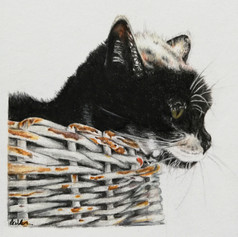 Cat in Basket - Coloured pencil