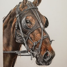 Horse - Coloured pencil
