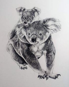Koalas - Charcoal
