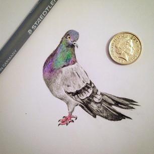 pigeon mini.jpg