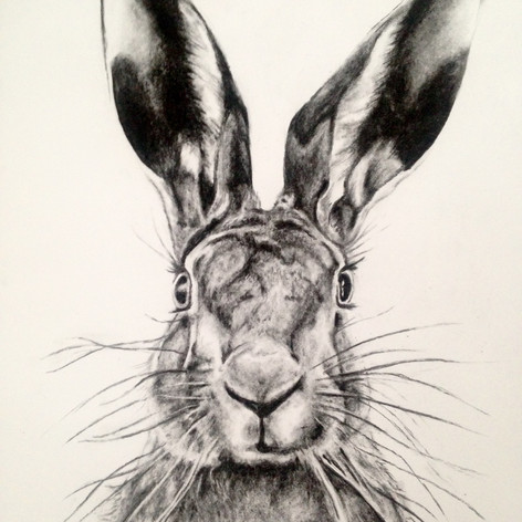 Hare - Charcoal