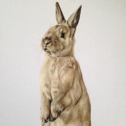 Rabbit - Coloured Pencil