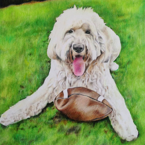 Goldendoodle (with background) - Coloured pencil