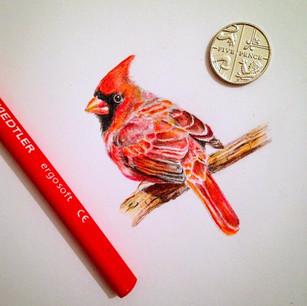 cardinal mini.jpg