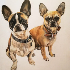 Frenchies - Coloured pencil