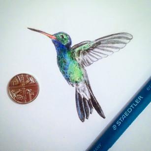 hummingbird mini.jpg