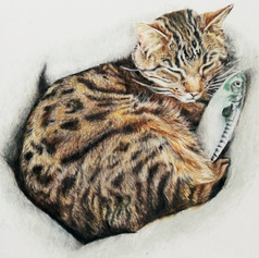 Tabby Cat with Fish - Coloured pencil