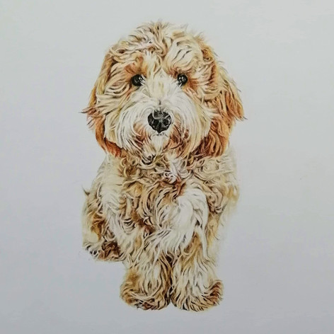 Dougal - Coloured Pencil