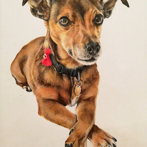 Bella - Coloured pencil