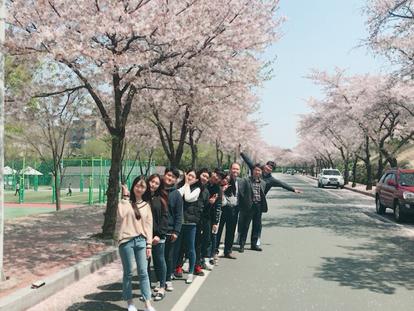 2017 벚꽃
