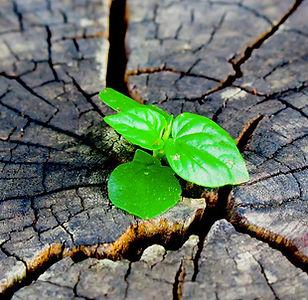 Lunettes bio écologiques recyclées recyclables