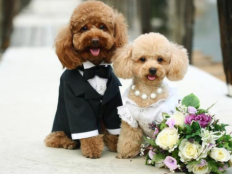 Ways to include your pet in your wedding