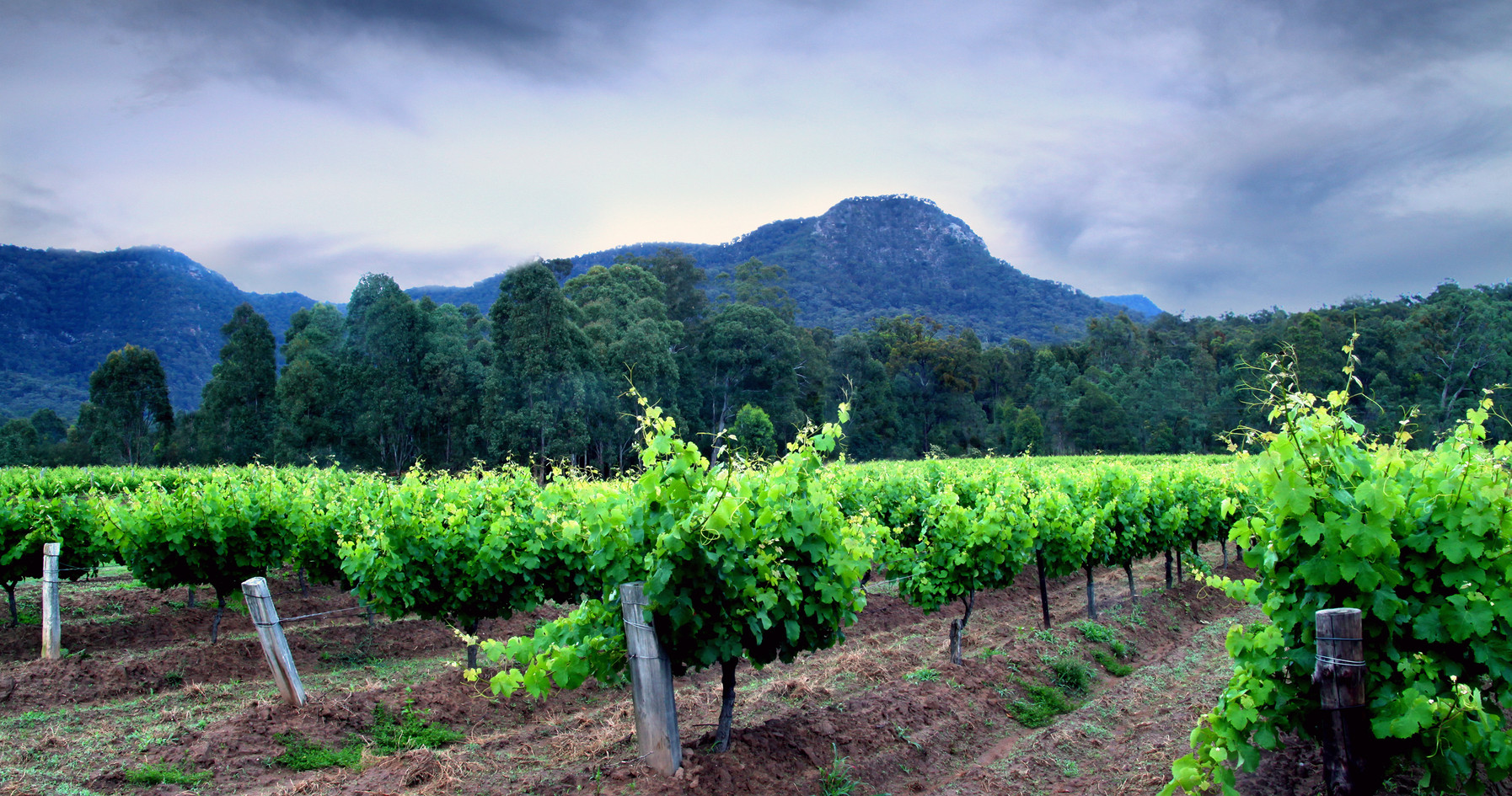 Hunter Valley vineyards, private tour, s
