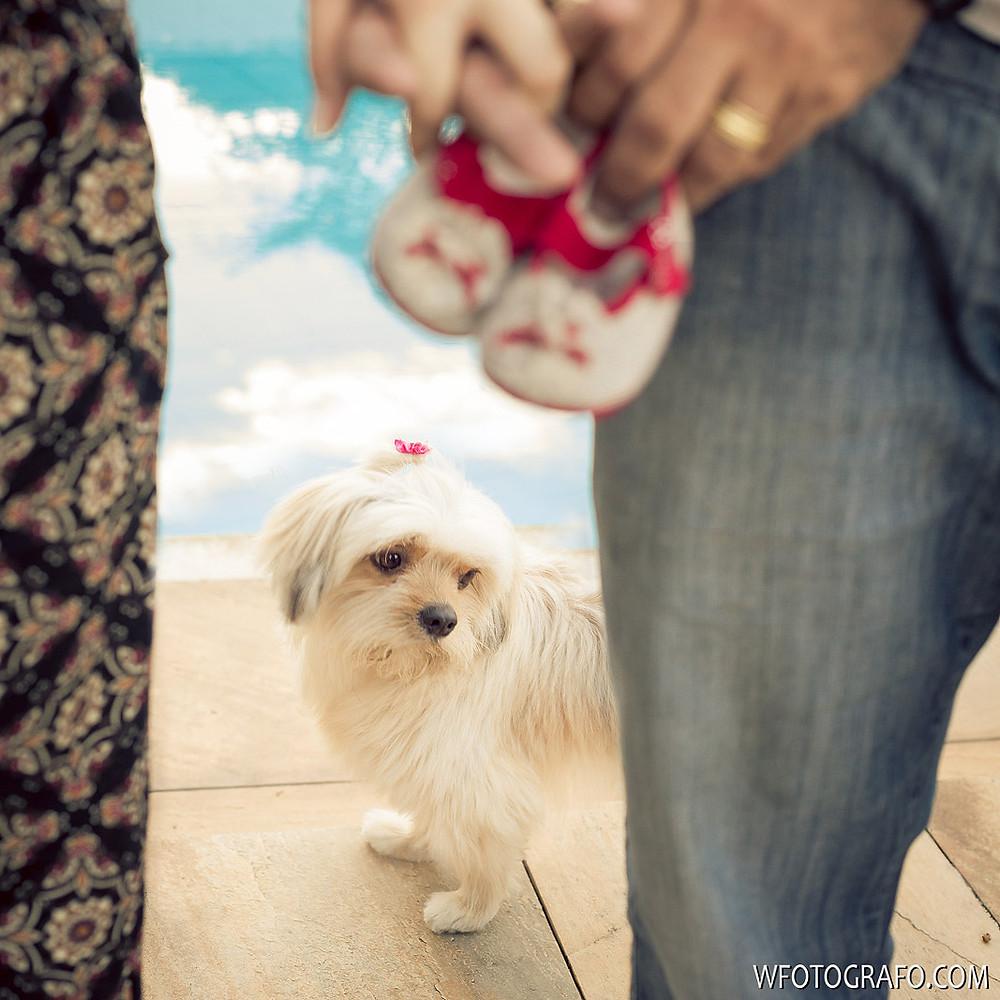 wolf fotografo bh belo horizonte gestante gravida família pampulha lagoa sessão book família fotografia cão cachorro
