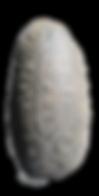 skål1+2.png