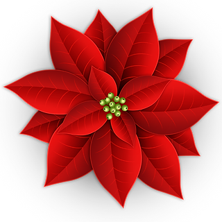 —Pngtree—christmas poinsettia decoration