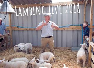 BEHIND THE SCENES..... Farmer Tom tells us his six top lambing tips.