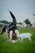 Goat Yoga at Mrs Dowsons Lancashire