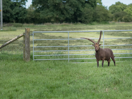 Farm First: Joy as rare breed sheep are welcomed to Mrs Dowsons