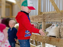 feeding lamb with logo .jpg