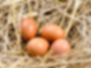 Acid Egg Shell Experiement - Mrs Dowsons