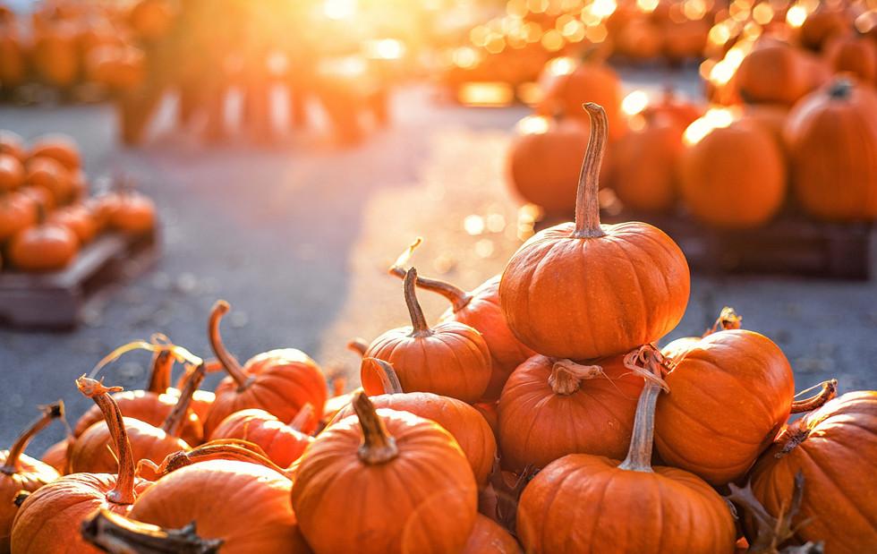 pumpkin-patch-warning-scaled.jpg