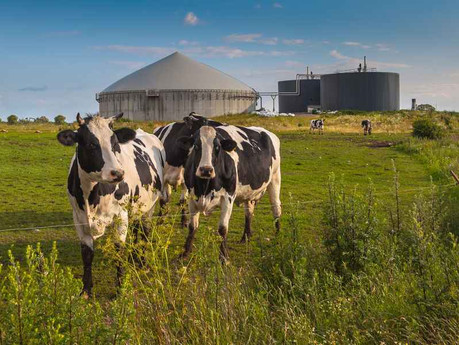Cow Poo 💩 now powers over a million UK homes, says new report