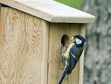 bird Box Mrs Dowsons Farm Park.jpeg