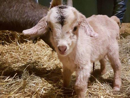 Meet the farm's new kid!