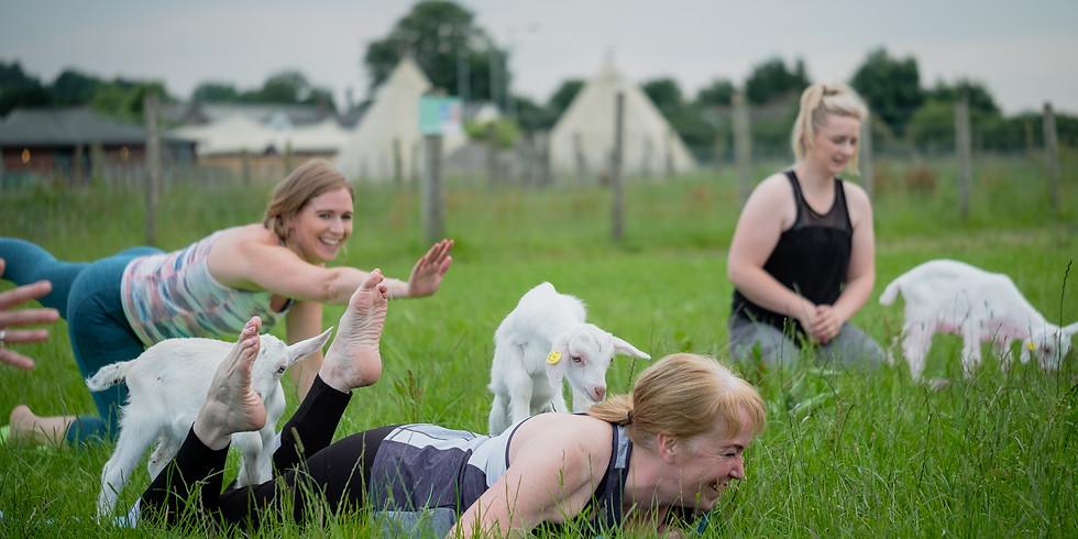 Goat Yoga -09092021